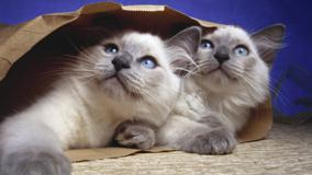 Cats Are Hiding Under A Paper Bag