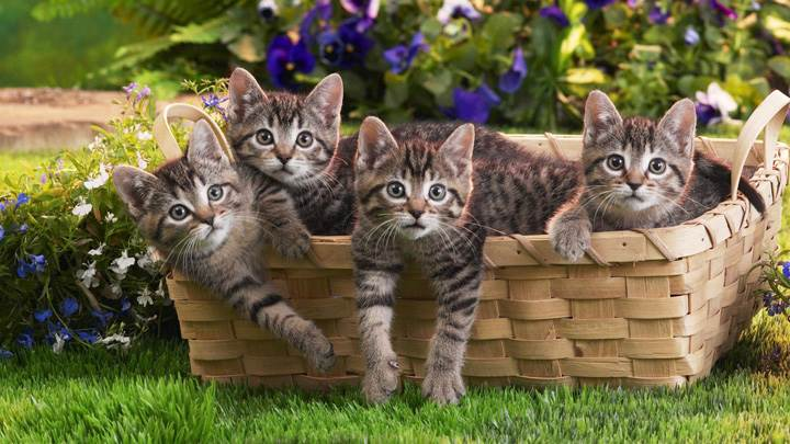 Four Cats In A Bucket