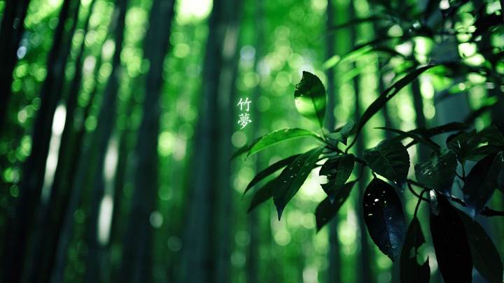 Green Leaves Photo In Forest