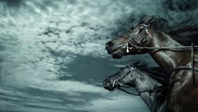Two Horses And Clear Sky Pic