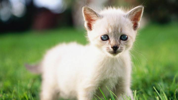 White Cat Looks Like A Dog
