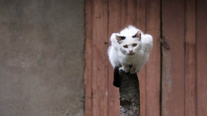 White Cat Sitting On A Piller