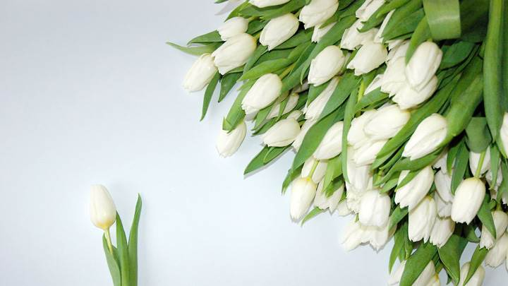 A Bunch Of White Tulips