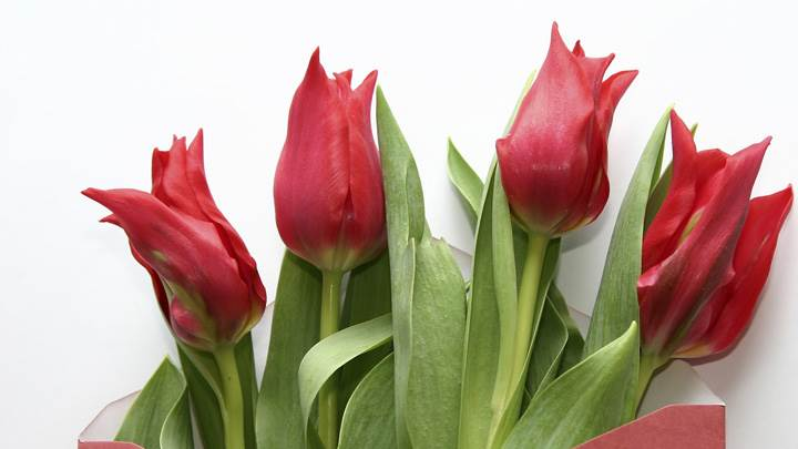 A Bunch Of Red Tulips Flowers