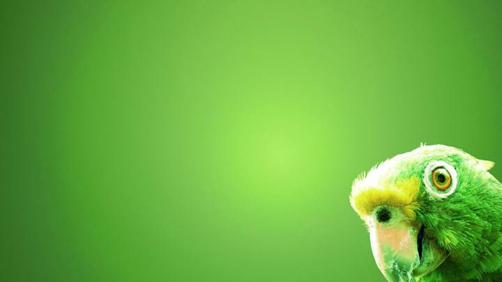 Green Parrot On Green Background