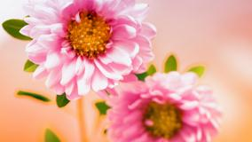 Pair Of Pink Floral Flower