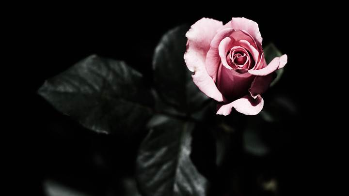 A Dark But Pink Love