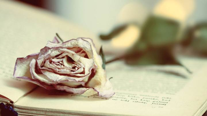 A Dry Rose On Book