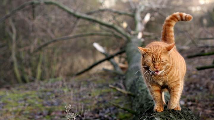 Angry Cat On Wooden Branch