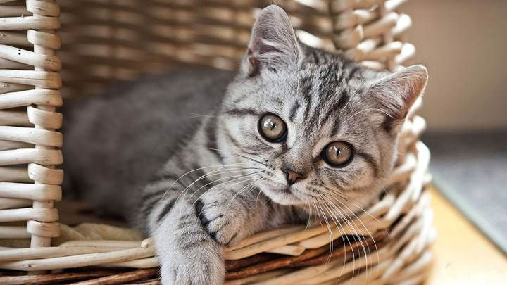 Cute Kitten Sitting In Wooden Bucket