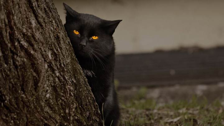 Dangerous Black Cat And Yellow Eyes