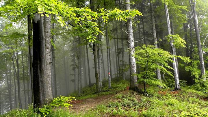 Morning Seen Of Green Forest