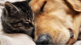 This Is Love, Dog Sleeping With Cat