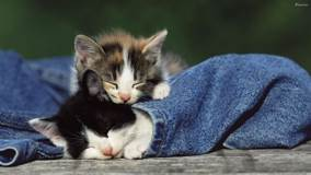 Two Kittens Sleeping In Jeans