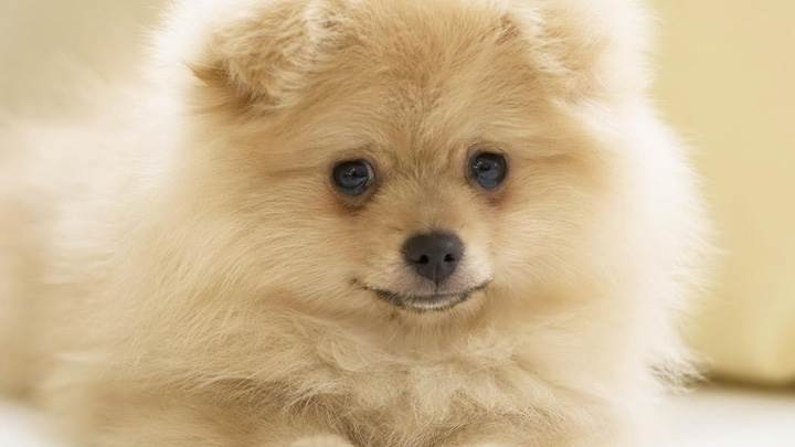 White Cute Dog Looking Sweet