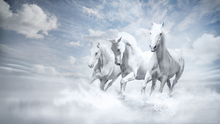 Beautiful Three White Horses Running Into Water