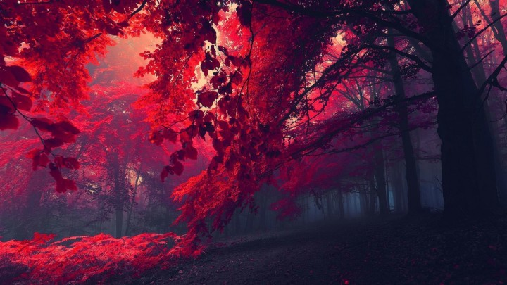 Who Wants To Walk In This Beautiful Red Forest?