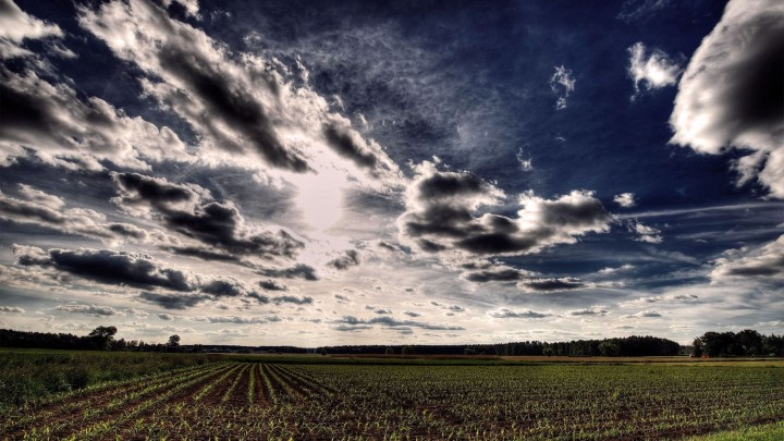 Black Clouds Over The Wheat Field